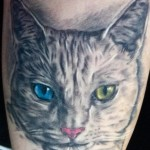 Two color eyed Cat Portait